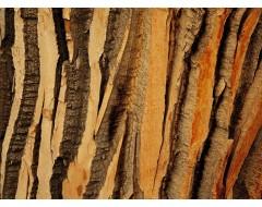 Кора деревьев
